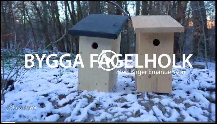 Bygga fågelholk med Birger Emanelsson